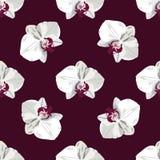 Patroonhand getrokken orchidee Royalty-vrije Stock Foto