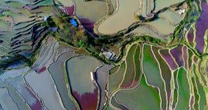 Patroonlandschap De gebieden van het rijstterras stock video