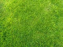 patroszona śródpolna trawy ręki ilustracja Obrazy Royalty Free
