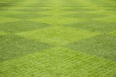 patroszona śródpolna trawy ręki ilustracja Zdjęcie Stock