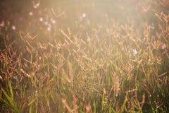 patroszona śródpolna trawy ręki ilustracja Obrazy Stock