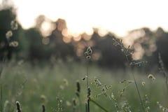 patroszona śródpolna trawy ręki ilustracja Fotografia Stock
