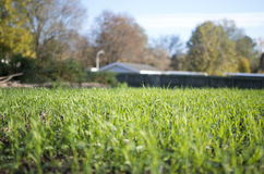 patroszona śródpolna trawy ręki ilustracja Fotografia Royalty Free