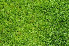 patroszona śródpolna trawy ręki ilustracja Zdjęcie Royalty Free