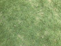 patroszona śródpolna trawy ręki ilustracja Zdjęcia Stock
