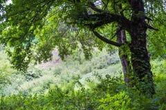 patroszona ręka odizolowywający lato drzewa wektoru biel Zdjęcie Royalty Free