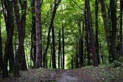 patroszona ręka odizolowywający lato drzewa wektoru biel Obrazy Royalty Free