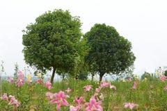 patroszona ręka odizolowywający lato drzewa wektoru biel Zdjęcie Stock