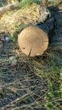 patroszona ręka odizolowywający lato drzewa wektoru biel Zdjęcia Stock