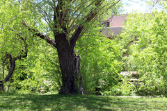 patroszona ręka odizolowywający lato drzewa wektoru biel Fotografia Royalty Free