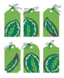 Patroszone zielone wektor etykietki z egzotycznymi Calathea Medaillon liścia ilustracjami royalty ilustracja