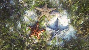 patroszonej ręki ilustracyjny oryginalny dennej gwiazdy stylu rocznik zbiory