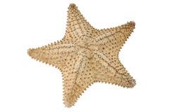 patroszonej ręki ilustracyjny oryginalny dennej gwiazdy stylu rocznik Odizolowywający na bielu Fotografia Stock
