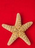patroszonej ręki ilustracyjny oryginalny dennej gwiazdy stylu rocznik Fotografia Royalty Free
