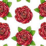 Patroszony czerwonych róż bezszwowy tło Kwitnie ilustracyjnego frontowego widok Zdjęcia Stock