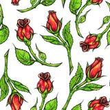 Patroszony czerwonych róż bezszwowy tło Kwitnie ilustracyjnego frontowego widok Handwork porad piórami Zdjęcia Royalty Free
