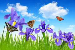 patroszony kwiatów ręki ilustraci irys obraz stock
