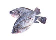 Patroszyjąca, ważąca i pokrajać Nil Tilapia ryba na białym tle, Fotografia Royalty Free