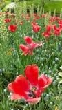 Patrs eines Blumenblattes lizenzfreie stockbilder