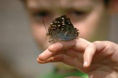 patrzeć na motyla Obrazy Stock