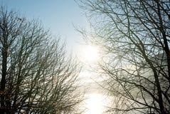 Patrzeć przez nagich jesiennych gałąź w sylwetce idylliczny, jaskrawy słońce, odbijał w jeziorze z mgłą, mgła i fotografia royalty free