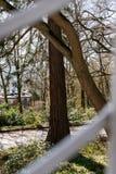 Patrzeć przez ogrodzenia przy naturą fotografia stock