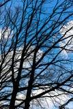 Patrzeć w błękitnym chmurnym niebie z nagimi gałąź w przedpolu Fotografia Stock