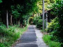 Patrzeć w dół krótką, małą lasową drogę, Zdjęcia Stock