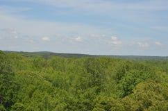 Patrzeć w dół przy drzewami Obraz Stock