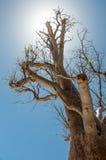 Patrzeć w słońce przez drzewa Fotografia Royalty Free