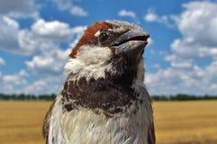 Patrzeć kamera ptak Obraz Royalty Free