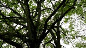 Patrze? na g?rze drzew woko?o i prz?dzalniany zbiory wideo