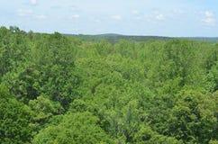 Patrzeć nad drzewami Zdjęcia Royalty Free