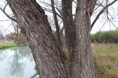 Patrzeć przez drzew obrazy royalty free
