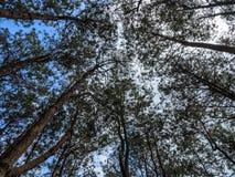 Patrzejący do Forest Green gałąź natury abstrakta, drzewo Obraz Stock
