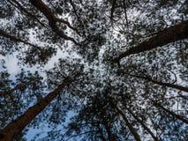 Patrzejący do Forest Green gałąź natury abstrakta, drzewo Obrazy Stock