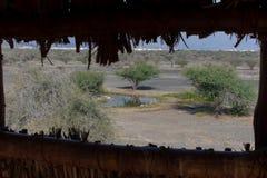 Patrzejący przez obserwacji stora w pustyni Zjednoczone Emiraty Arabskie za obszarze trawiastym lub wierza przyrody i ptaka, r fotografia stock