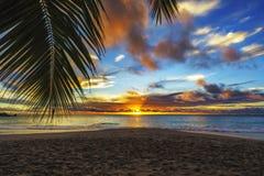 Patrzejący przez palmowego liścia przy zmierzchem przy anse georgette, praslin, se zdjęcia royalty free
