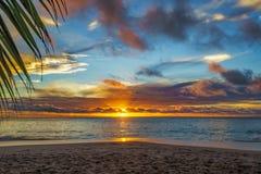 Patrzejący przez palmowego liścia przy zmierzchem przy anse georgette, praslin, Seychelles 13 zdjęcia stock