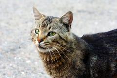 Patrzeje dorosły bezdomny dostrzegający kot fotografia stock