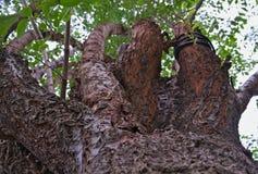 Patrzeje drzewa od bellow zdjęcie royalty free