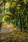 Patrzeje jesieni aleję z spadać żółtymi liśćmi w wierzchu Obraz Stock
