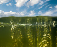 Patrzeje nad woda i pod wodą w jeziorze Obrazy Royalty Free