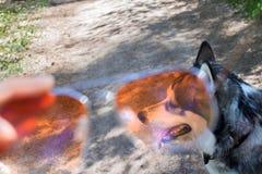Patrzeje on przez okularów przeciwsłonecznych Obraz Royalty Free