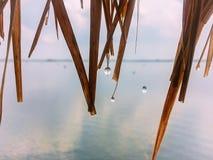 Patrzeje rzekę z deszcz kroplą na bambusowym dachu Zdjęcia Stock