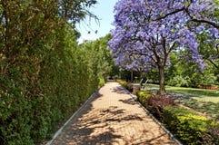 Patrzeje spacer Johannesburg zoo zdjęcie royalty free