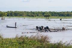 Pattalung 8 de abril:: búfalo de agua del pastor del hombre en parada del búfalo Fotografía de archivo