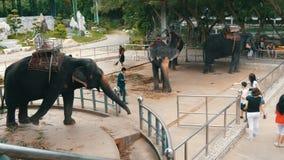 Pattaya, Ταϊλάνδη - 30 Δεκεμβρίου 2017: Πολλοί διαφορετικοί ινδικοί ελέφαντες περπατούν γύρω από το Valery στο αγρόκτημα κροκοδεί φιλμ μικρού μήκους