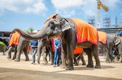 Pattaya, Ταϊλάνδη:  Ο ελέφαντας παρουσιάζει. Στοκ φωτογραφίες με δικαίωμα ελεύθερης χρήσης
