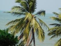 Pattaya images stock